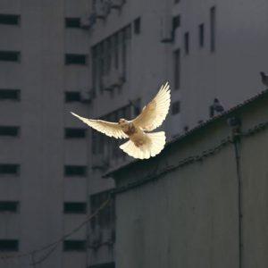 Comment trouver la paix de Dieu